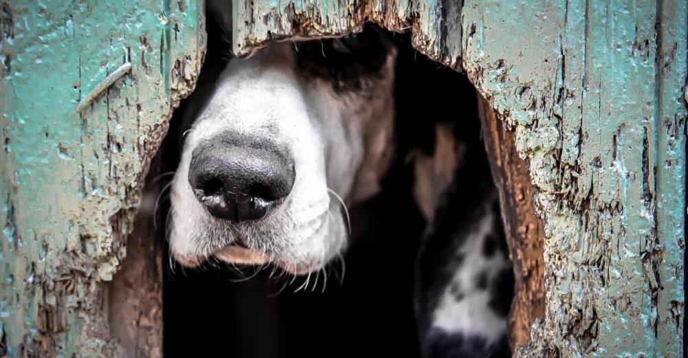 Aprende a identificar el stress de los perros