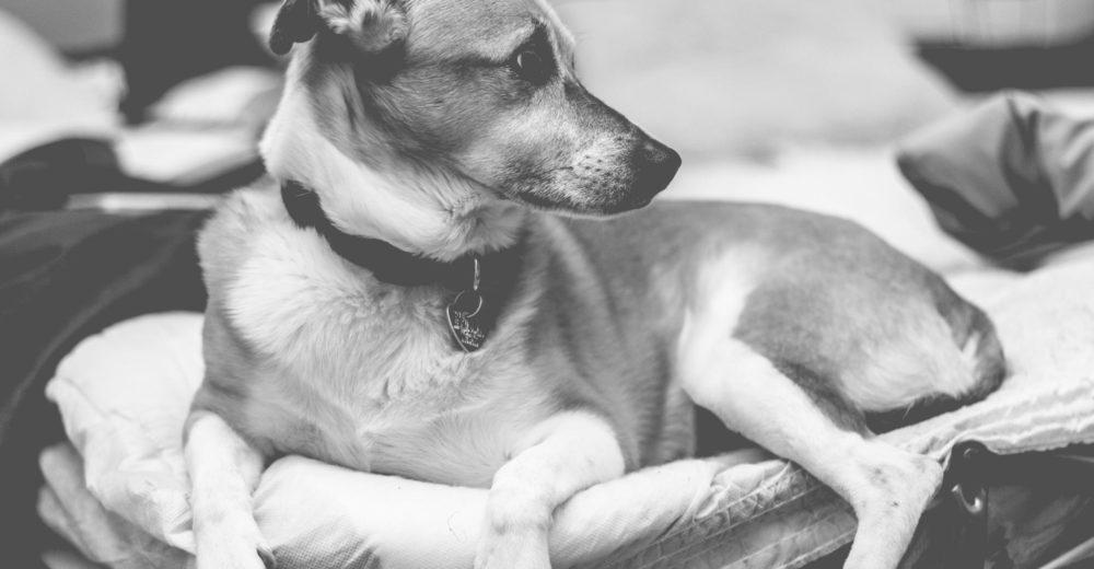 Cómo detectar y curar la ansiedad por separación en los perros