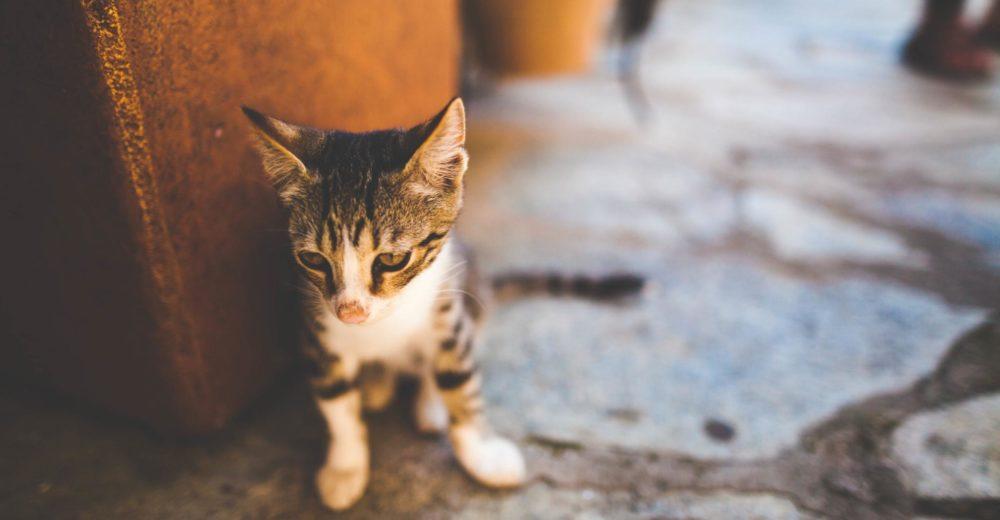 Consejos para el manejo del gatito huérfano