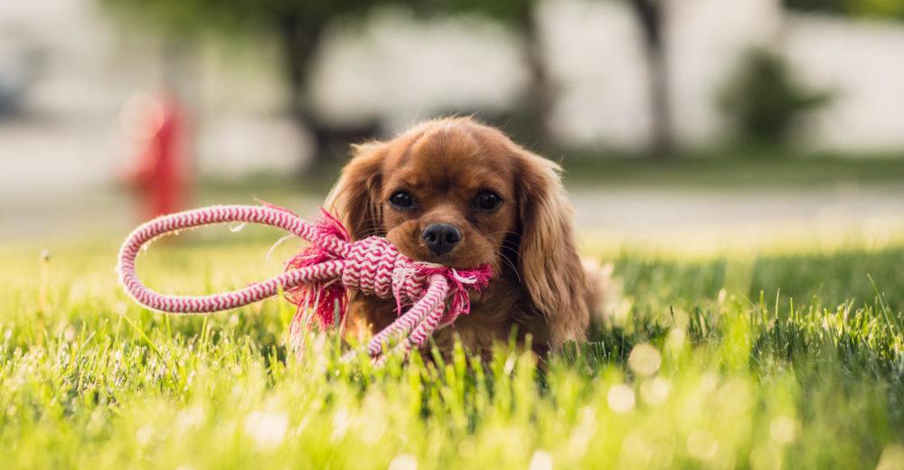 Coronacio Centre Veterinari ofrece un nuevo servicio de censo canino en Bocairent