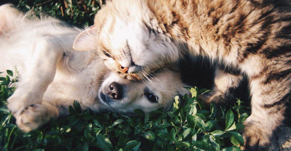 Insuficiencia renal en las mascotas