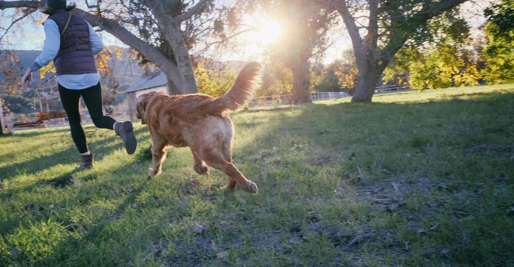 ¿Como puedo proteger a mi mascota de los parásitos?