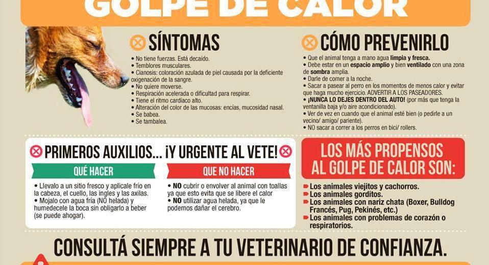 Que hacer y como evitar un golpe de calor en nuestras mascotas