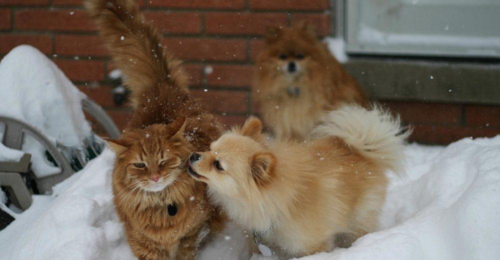 10 consejos para el frio extremo en las mascotas